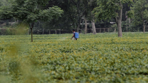 Long shot of tea garden,spray-man spraying insecticide in India Footage