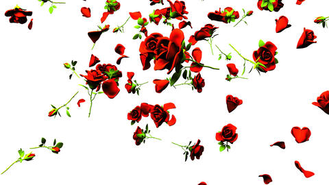 Falling Red Roses On White Background Animation