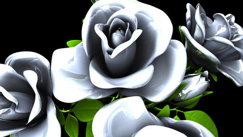 White Roses Bouquet on Black Background CG動画