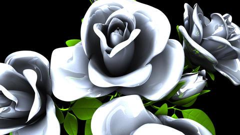 White Roses Bouquet on Black Background Animation