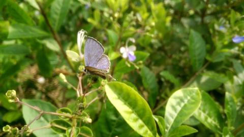 Butterfly plant animal leaves Footage