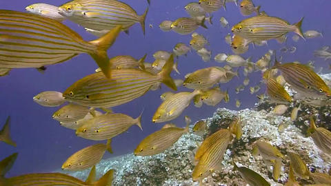 Diving scuba diving underwater fish Footage
