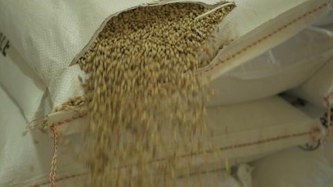 Barley malt in bags Photo