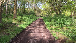 Country lane in English forest Chorleywood Hertfordshire UK Footage