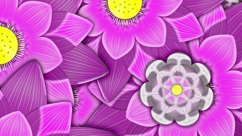 Spring Flowers 4K 02 Vj Loop Animation