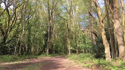 Country lane in English forest Chorleywood Common Chorleywood Hertfordshire UK Footage