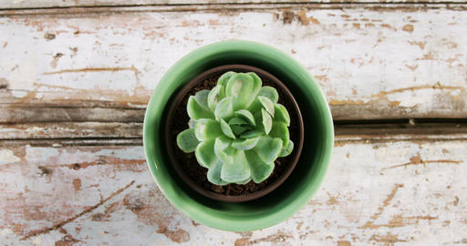 Close-up of pot plant Live Action