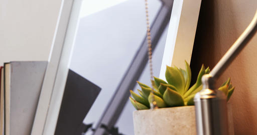 Aloe vera plant, table lamp and photo frame Live Action