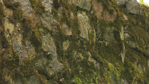Green moss on old stone wall. Stone texture background Live Action
