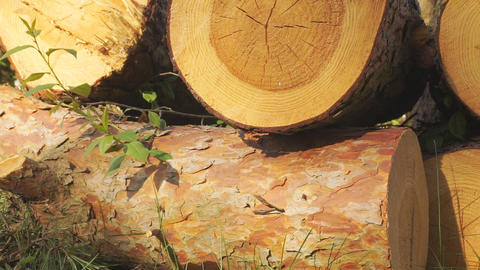 Logs and timber. Heap of sliced wooden logs close up ビデオ