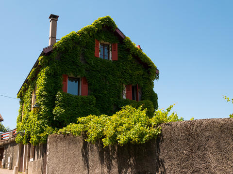 typical house overgrown with ivy in Annecy, France Photo