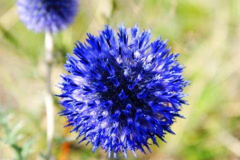 Amazing Flower Photo