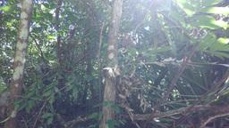 monkeys in the jungle Footage