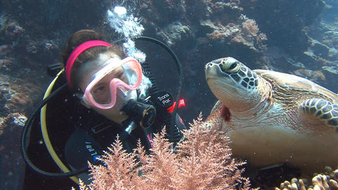 Fun dive with sea turtles Live Action