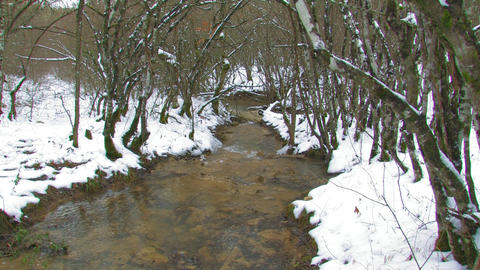 Stream in the Winter Forest Footage