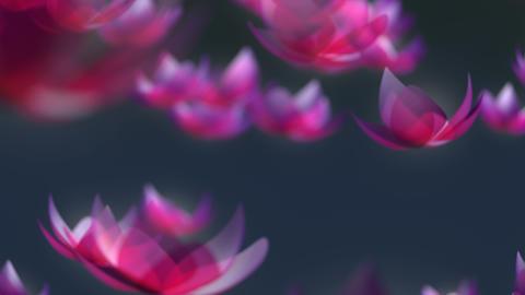 Lotus flower falling animation Stock Video Footage