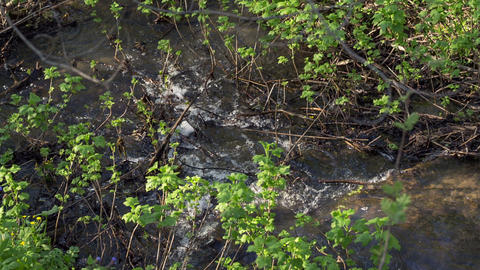 Creek in the woods5 Footage