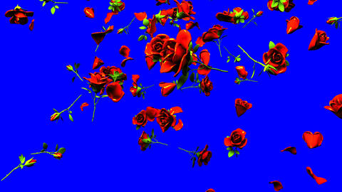Falling Red Roses On Blue Chroma Key CG動画