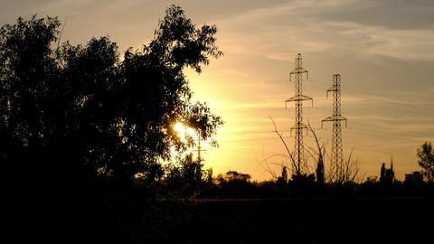 A silhouette of a branchy tree, standing against the sunset and antennas Live Action