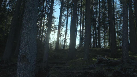 Fabulous forest penetrated by sun beams calling for…, Live Action