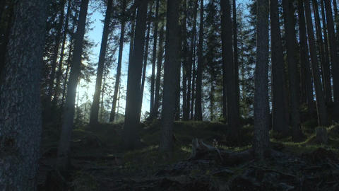 Fabulous forest penetrated by sun beams calling for adventures, beautiful nature Footage