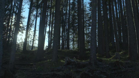 Fabulous forest penetrated by sun beams calling for... Stock Video Footage