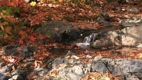 Creek stream autumn maple foliage Footage