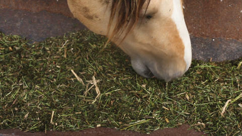 The horse eats feed from the trough Footage