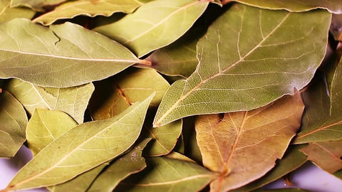 Laurel leaf. Dry whole spice leaves rotating pattern macro texture background Footage