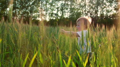 A little boy goes into a field with ears in the sunset light to meet his mother Footage
