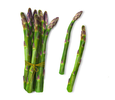 Watercolor Isolated art of asparagus フォト
