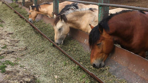 Horses eat feed from the trough Footage