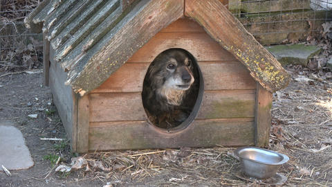 Old dog in old doghouse in farm Footage