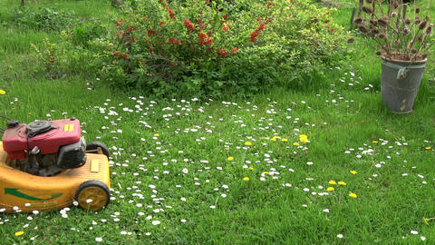 gardener in farm yard cut spring grass with lawn mower Live Action