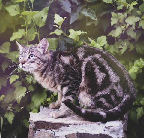young gray street striped cat sitting フォト