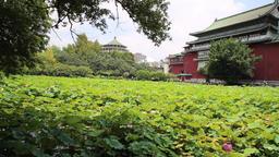 Lotus Pond Taipei Botanical Garden Taipei Taiwan pan Footage