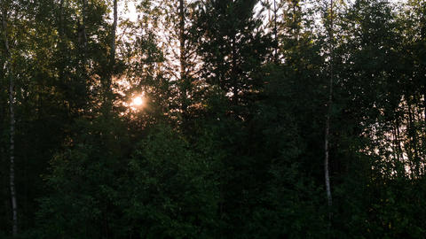 Sunrise Time Lapse Between Trees In Sweden stock footage