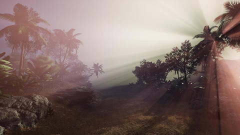4k Amazing sunset at tropical palms landscape with palm trees Live Action
