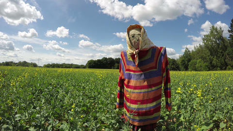 Decorative lonely scarecrow on rapeseed field, time lapse Archivo