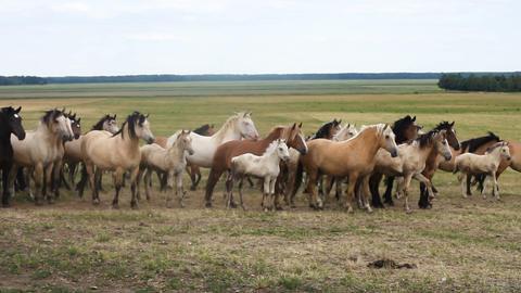 Horses running around the field 影片素材