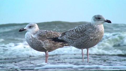 Birds Beach Footage