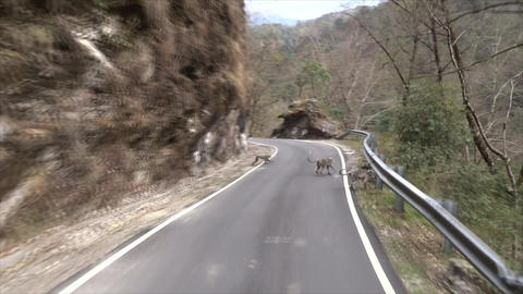 Monkeys on the road ビデオ