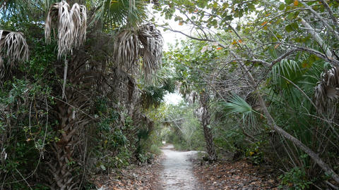 Walking trail at the Barefoot Beach State Preserve Live Action