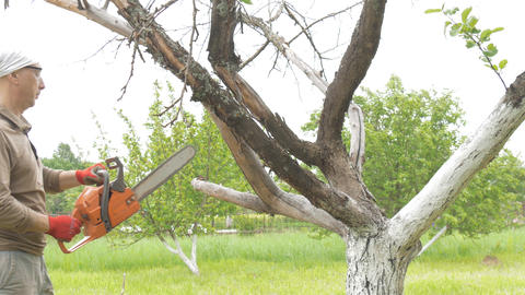 A man cuts a chain saw tree near his house. Green trees in the background Footage