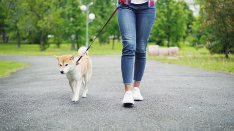 Slow motion low shot of young woman in jeans walking her adorable small dog in Live Action