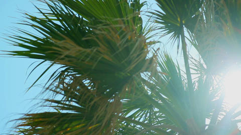 Palm branches in the sun. Slow motion palm trees with sun Live Action