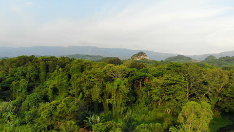 Aerial view drone shot scenic landscape tropical nature tree forest against a mountain Live Action