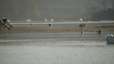 Birds on sandbanks 3 Live Action