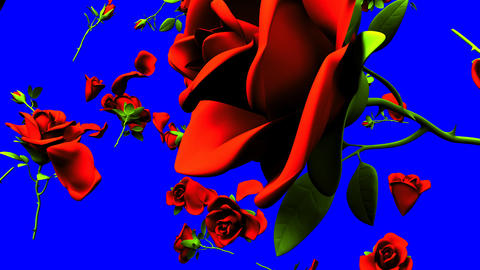 Falling Red Roses On Blue Chroma Key Animation