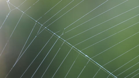 Beautiful cobweb pattern Archivo